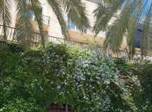 A shaded view of Palma palma flowers mallorca flowergram instaflowerhellip