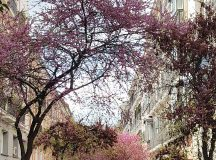 Spring is definitely here in Madrid This must be onehellip