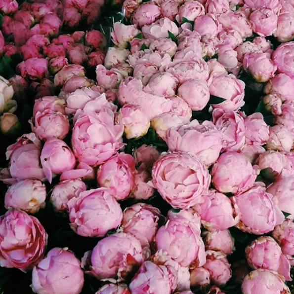 New York peonies