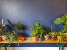 Plant goals doughsocietyldn This cafe in Hackney is a coolhellip